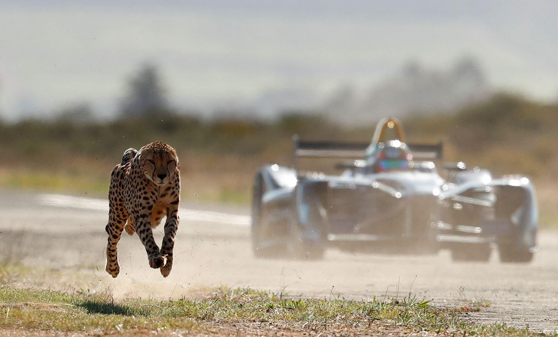 Жан-Эрик Вернь посоревновался в скорости с гепардом