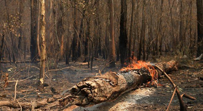 Ралли Австралии отменено из-за лесных пожаров